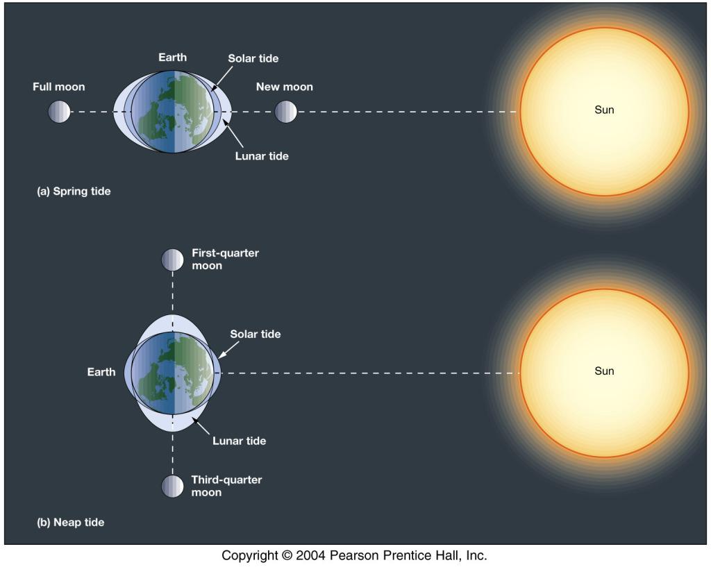 هنگامی که نیروهای کشندزای ماه و خورشید هماهنگ عمل میکنند، مثلاً هنگام ماه نو که هر دو در یک طرف زمین هستند، جزر و مدها در بیشینه خود هستند و به نام کشند فنری یا «مهکشند» (spring tide) نامیده میشود، حد دیگر وقتی است که خورشید و ماه باهم زاویه ۹۰ درجه (تربیع) میسازند در این هنگام جزر و مد را به کمینه و به کشندهای کوچک یا «کهکشند» (neap tide) بدل میسازند.